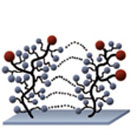 2D-functionalized Glass Slides